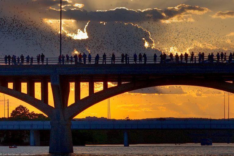 Desperate Darkness: Congress Avenue Bridge