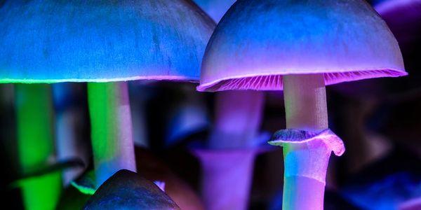 NeonMind: Mushroom Magic or Fungi Failure in 2021?