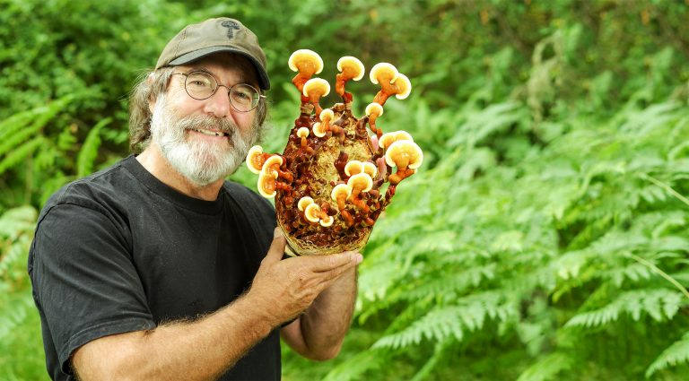 Paul Stamets: The Fantastic and Promising Future of Fungi and Psilocybin